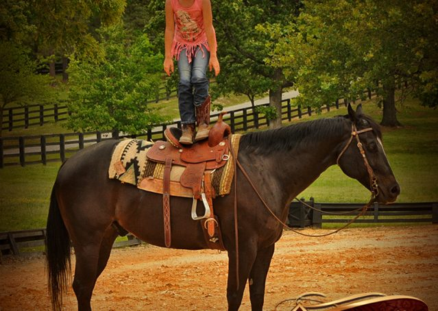 013-Chip-Bay-AQHA-Gelding-For-Sale