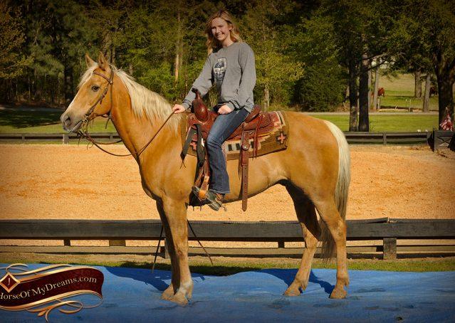 013-Regent-Palomino-Quarter-Horse-Gelding-For-Sale