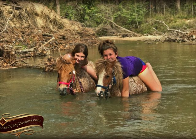 013-Spice-Red-Roan-Pony-For-Sale