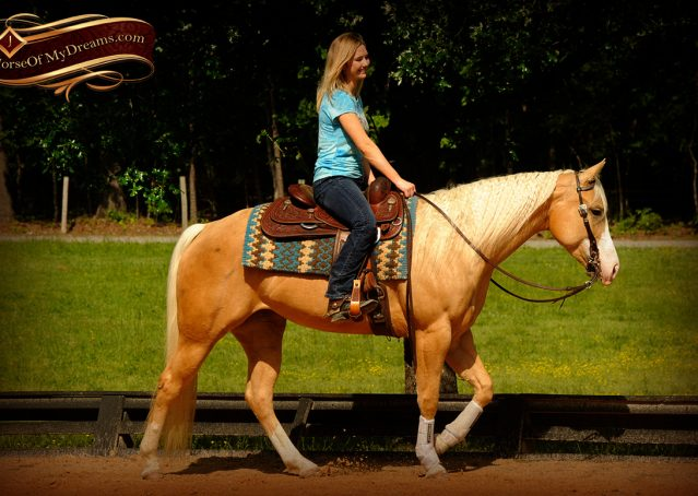 014-Chanel-Palomino-AQHA-Reining-mare-for-sale