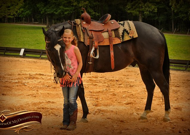 014-Chip-Bay-AQHA-Gelding-For-Sale