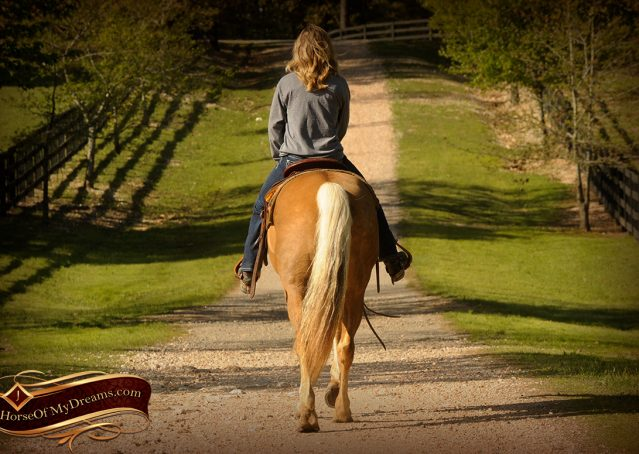 014-Regent-Palomino-Quarter-Horse-Gelding-For-Sale