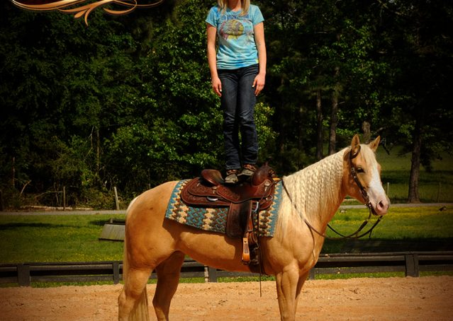 015-Chanel-Palomino-AQHA-Reining-mare-for-sale