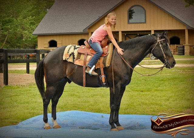 015-Chip-Bay-AQHA-Gelding-For-Sale