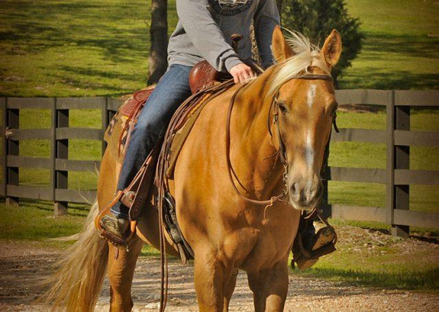 015-Regent-Palomino-Quarter-Horse-Gelding-For-Sale