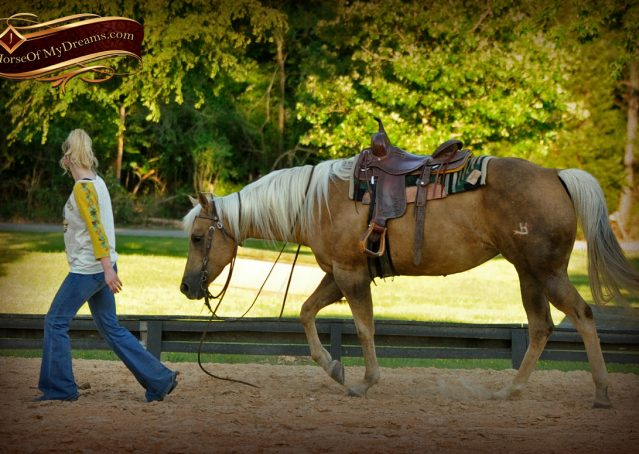 016-Angel-Palomino-Quarter-Horse-Mare-For-Sale