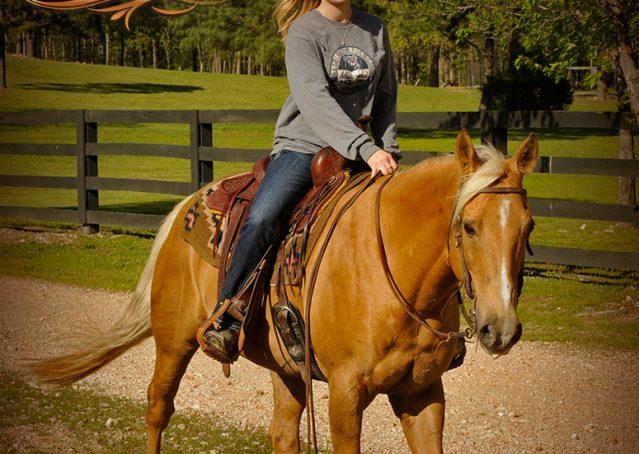 016-Regent-Palomino-Quarter-Horse-Gelding-For-Sale