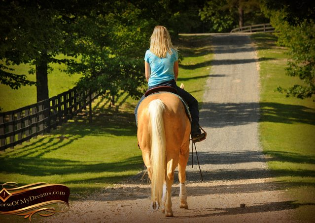 017-Chanel-Palomino-AQHA-Reining-mare-for-sale
