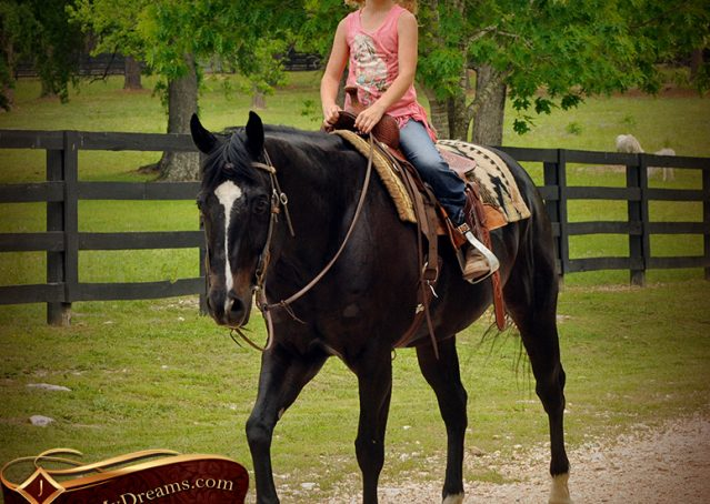 017-Chip-Bay-AQHA-Gelding-For-Sale