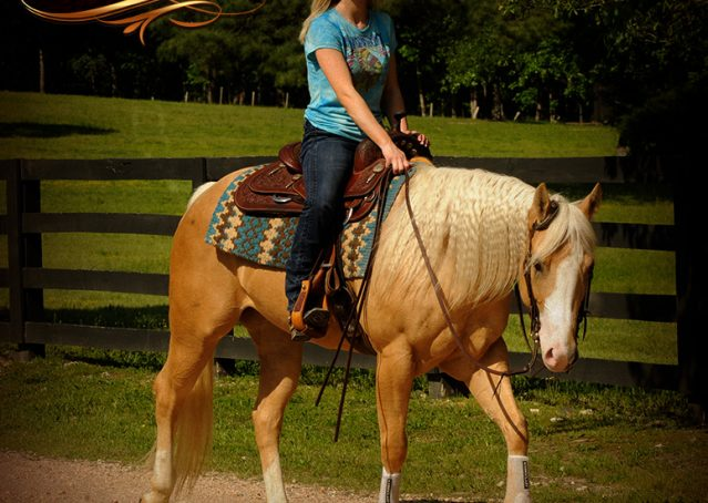 018-Chanel-Palomino-AQHA-Reining-mare-for-sale