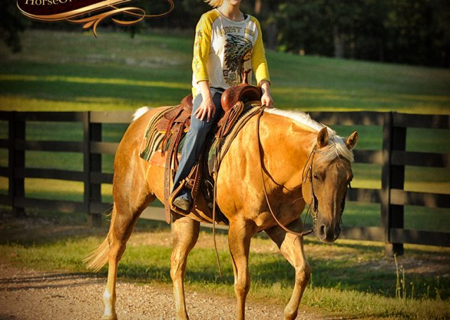 020-Angel-Palomino-Quarter-Horse-Mare-For-Sale