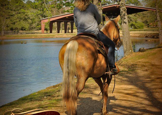 020-Regent-Palomino-Quarter-Horse-Gelding-For-Sale