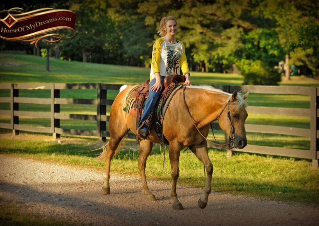 021-Angel-Palomino-Quarter-Horse-Mare-For-Sale
