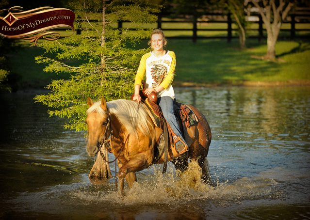 022-Angel-Palomino-Quarter-Horse-Mare-For-Sale