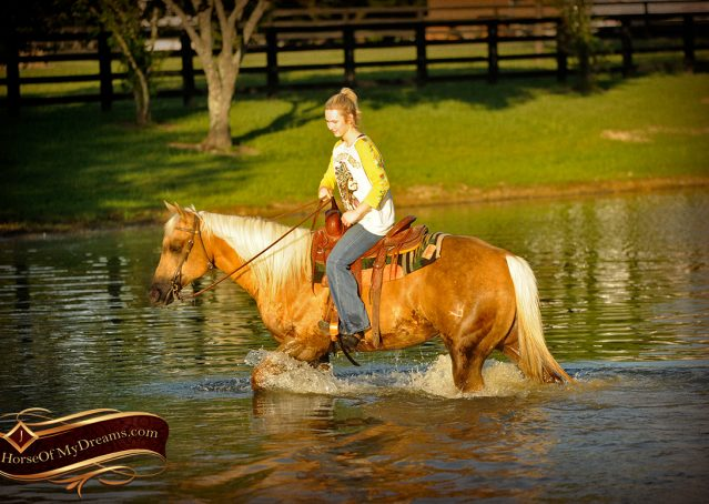 024-Angel-Palomino-Quarter-Horse-Mare-For-Sale