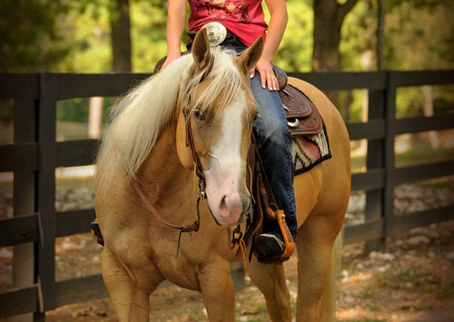 027-Chanel-Palomino-AQHA-Reining-mare-for-sale