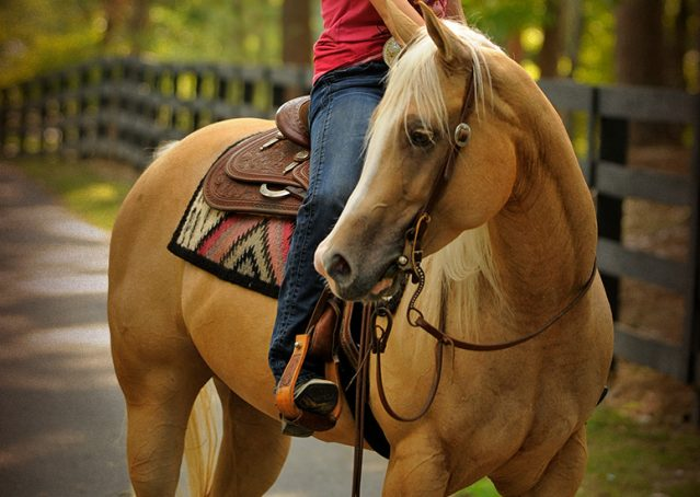 029-Chanel-Palomino-AQHA-Reining-mare-for-sale