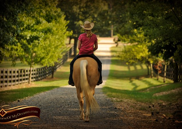 030-Chanel-Palomino-AQHA-Reining-mare-for-sale