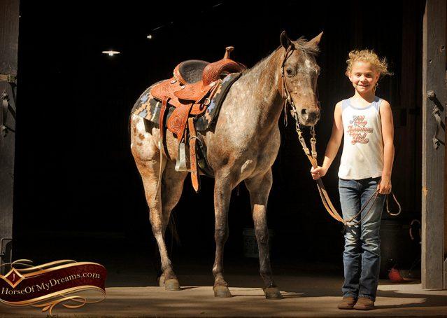 001-GiGi-Appaloosa-Pony-Mare-For-Sale