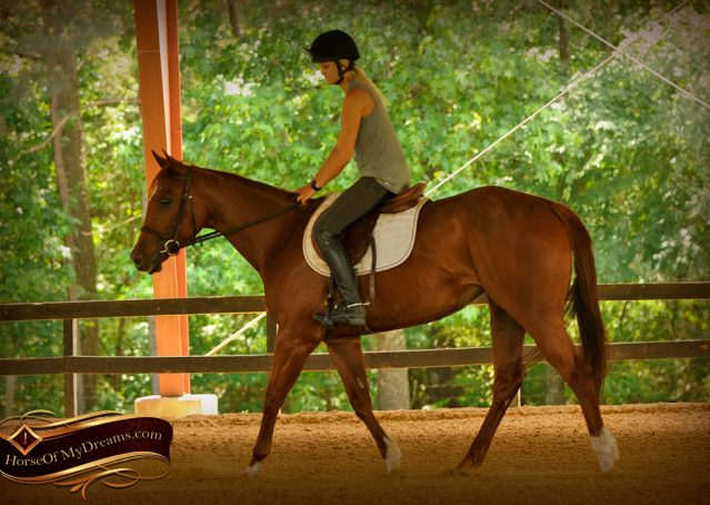 001-Sparkles-Sorrel-AQHA-Mare-For-Sale