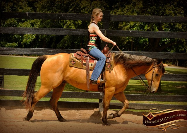002-Bert-Buckskin-AQHA-Gelding-For-Sale