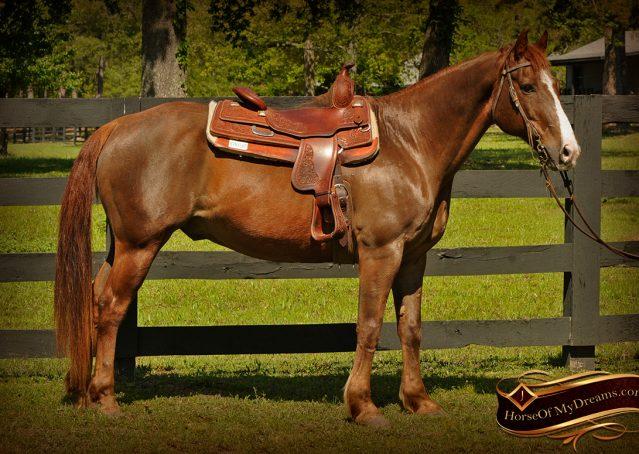 002-Ollie-Sorrel-Quarter-Horse-Gelding-For-Sale