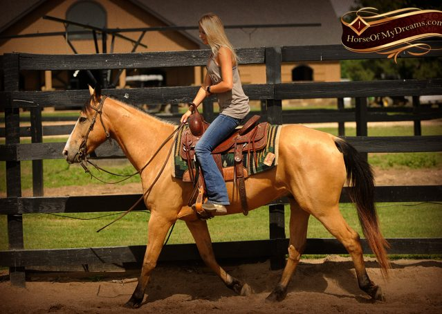 002-Perry-Buckskin-AQHA-Gelding-For-Sale