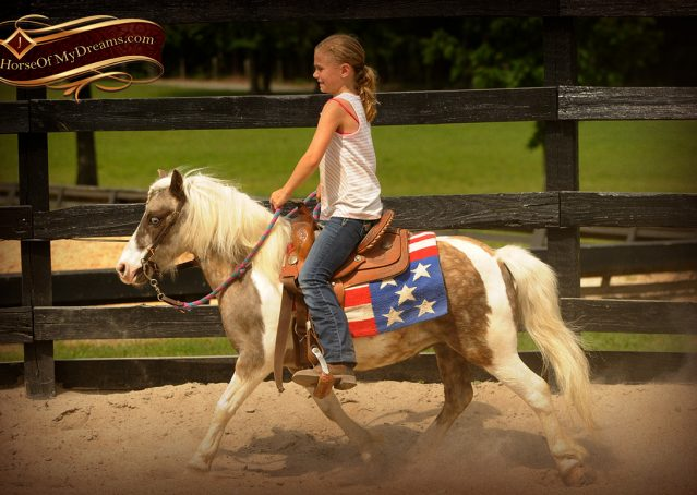 002-Smokey-paint-pony-gelding-for-sale