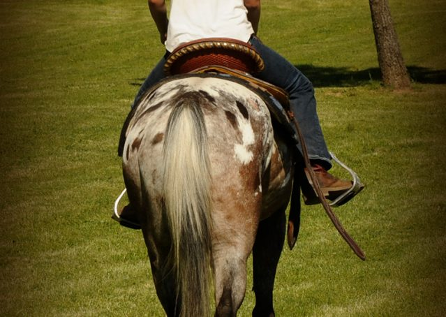 003-GiGi-Appaloosa-Pony-Mare-For-Sale