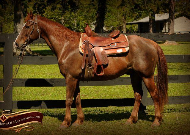 003-Ollie-Sorrel-Quarter-Horse-Gelding-For-Sale