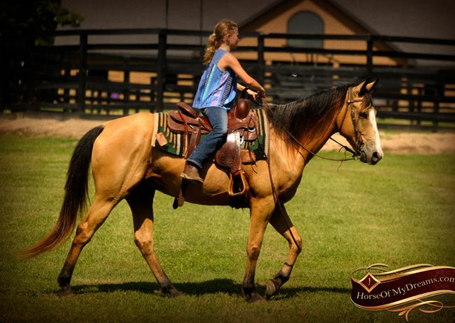 003-Perry-Buckskin-AQHA-Gelding-For-Sale