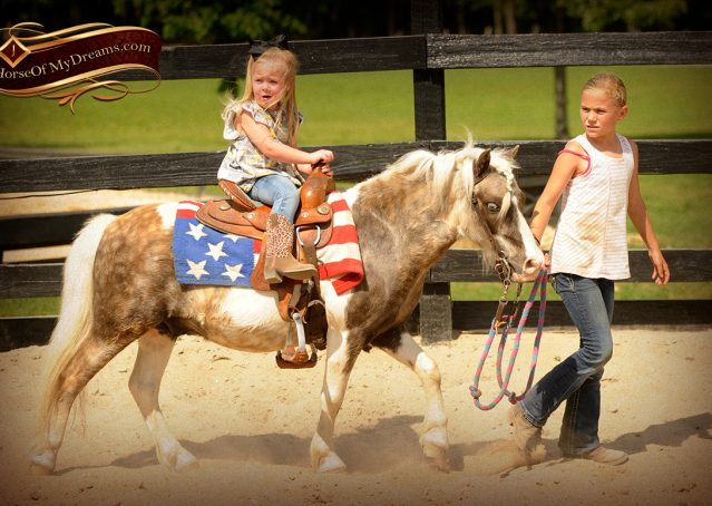003-Smokey-paint-pony-gelding-for-sale