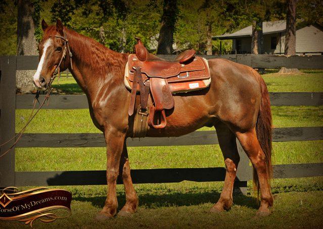 004-Ollie-Sorrel-Quarter-Horse-Gelding-For-Sale