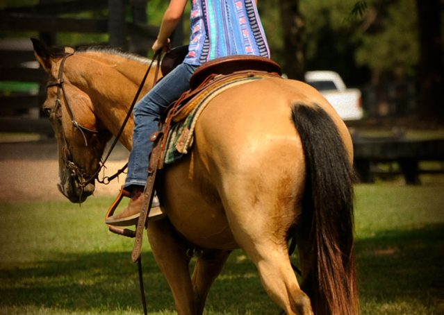 004-Perry-Buckskin-AQHA-Gelding-For-Sale