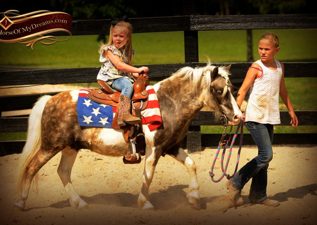 004-Smokey-paint-pony-gelding-for-sale