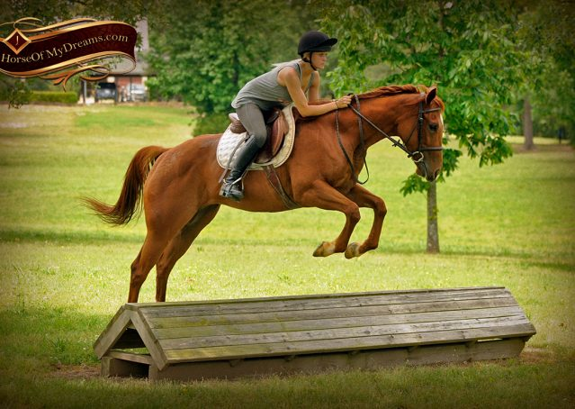 004-Sparkles-Sorrel-AQHA-Mare-For-Sale