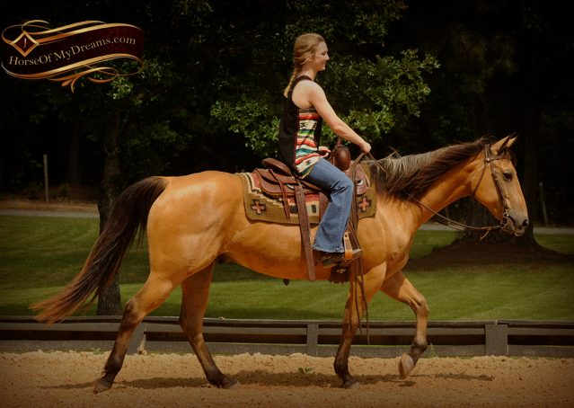 005-Bert-Buckskin-AQHA-Gelding-For-Sale