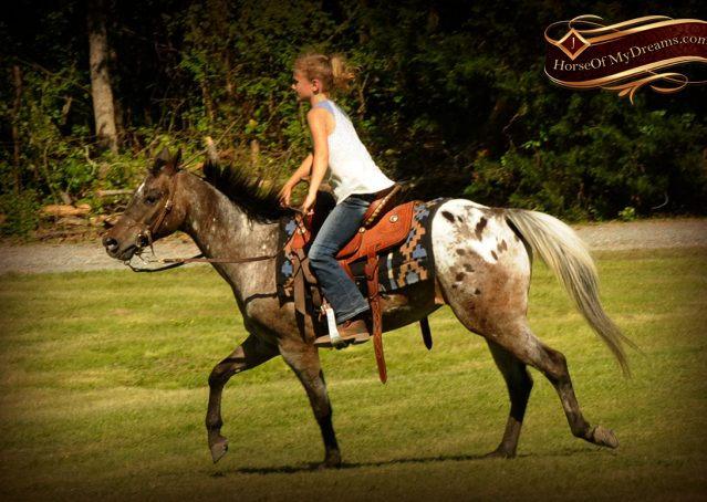 005-GiGi-Appaloosa-Pony-Mare-For-Sale