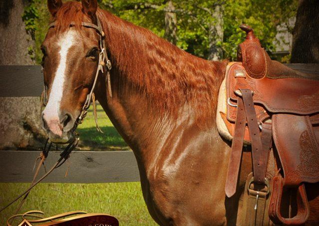 005-Ollie-Sorrel-Quarter-Horse-Gelding-For-Sale