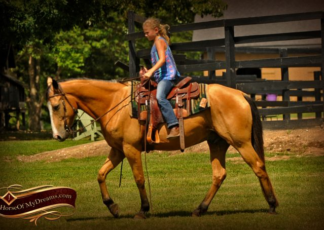 005-Perry-Buckskin-AQHA-Gelding-For-Sale