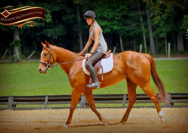 005-Sparkles-Sorrel-AQHA-Mare-For-Sale