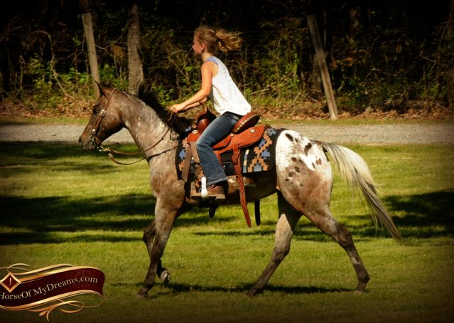 006-GiGi-Appaloosa-Pony-Mare-For-Sale
