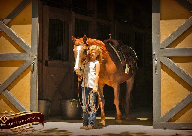006-Ollie-Sorrel-Quarter-Horse-Gelding-For-Sale