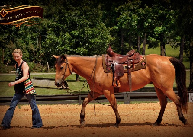 007-Bert-Buckskin-AQHA-Gelding-For-Sale