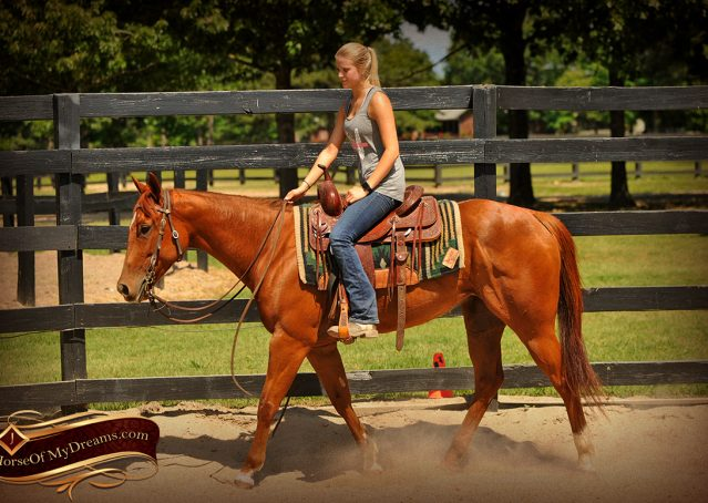 007-Sparkles-Sorrel-AQHA-Mare-For-Sale