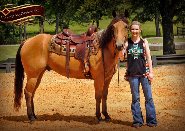 008-Bert-Buckskin-AQHA-Gelding-For-Sale