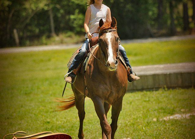 008-Ollie-Sorrel-Quarter-Horse-Gelding-For-Sale