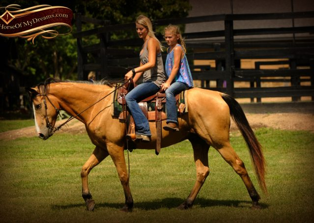 008-Perry-Buckskin-AQHA-Gelding-For-Sale