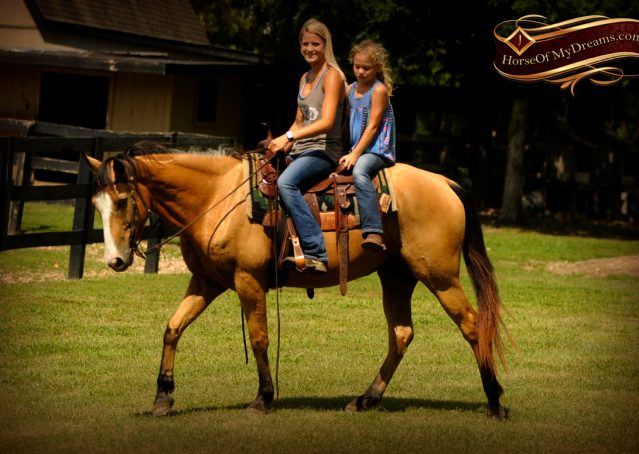 009-Perry-Buckskin-AQHA-Gelding-For-Sale