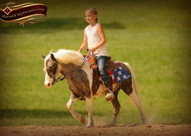 009-Smokey-paint-pony-gelding-for-sale